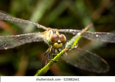 Dragonfly on nature leaves as background