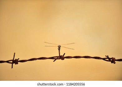 A dragonfly on the rusty wire entanglements