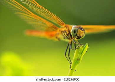 Dragonfly on tree top with focus on eyes.