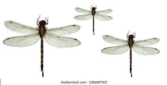 Dragonfly on a white background.