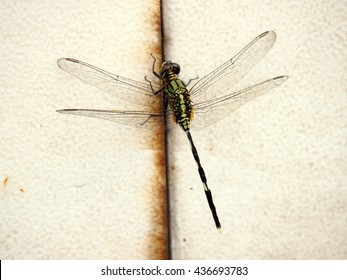 a dragonfly on a white steel wall