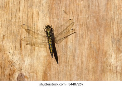Dragonfly on wooden wall