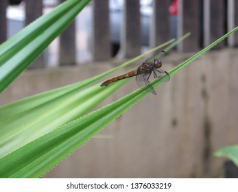 Dragonfly perched in the bush