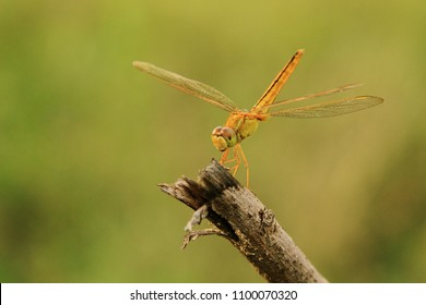 dragonfly perched on twigs