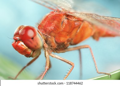 Dragonfly - red