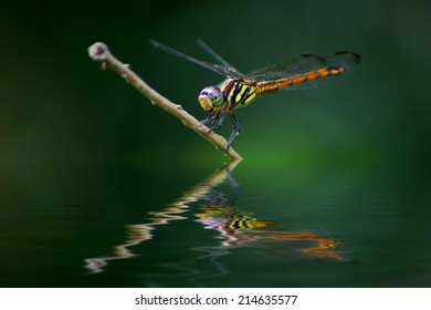 dragonfly with reflection effects