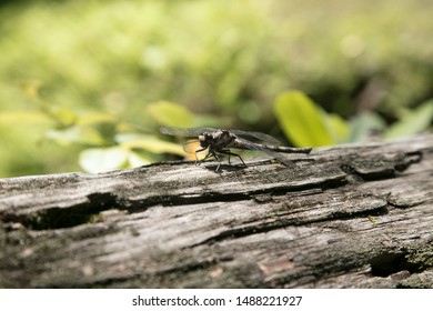 Dragonfly resting on a log