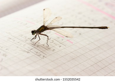 Dragonfly resting on a notebook in mathematics