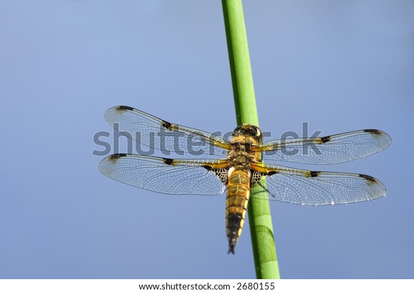 Dragonfly resting on a plant in a pond