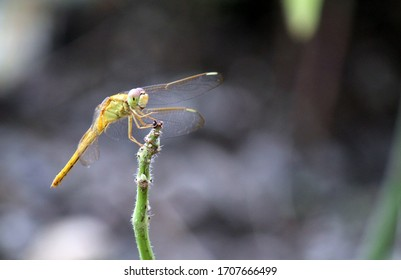 a dragonfly is resting on the tip of a green branch