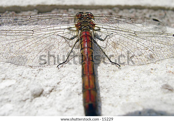 A dragonfly resting on a white brick wall