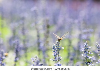The dragonfly rests on the beautiful purple flowers.