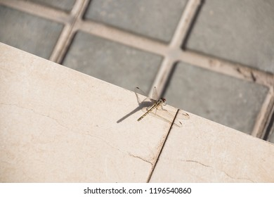 A dragonfly and its shadow.