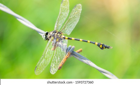 Dragonfly showing of eyes and wings detail.Macro shots, Beautiful nature scene dragonfly.