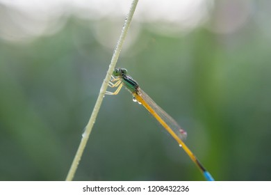 Dragonfly sit on the grass with dew drop in the morning
