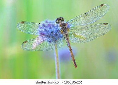 dragonfly sitting on a flower