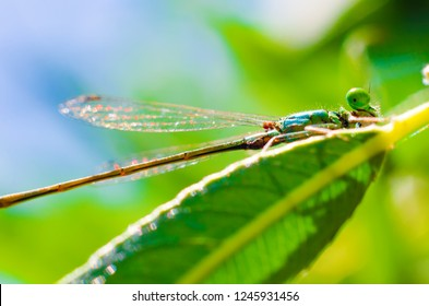 dragonfly sitting on a leaf closeup