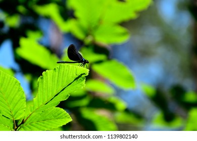 Dragonfly sitting on a leave with a blurry background