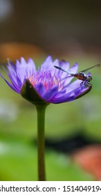 A dragonfly stay still on a purple flower in a pond