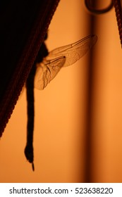 Dragonfly in tent