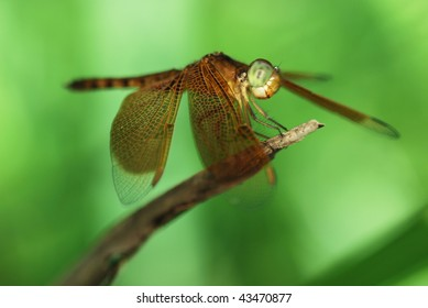 Dragonfly under natural sun light