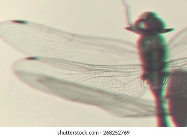 Dragonfly wings close up with 3D anaglyph effect