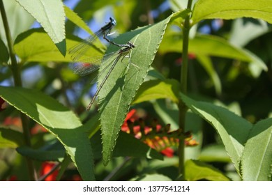 dragonflys on a leaf on a sunny day