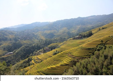 Dragon's Backbone Longji Rice Terraces in Yangshuo, China