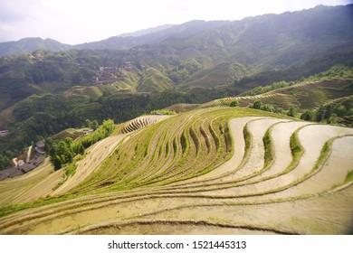 Dragon's Backbone Rice Terraces, or Longji Rice Terraces, located in Guilin, Guangxi Zhuang