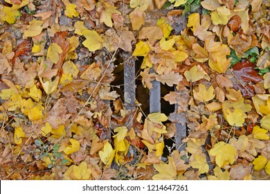 A drain is blocked by lots of colorful leaves and there is hardly any space for water to drain