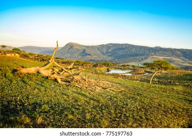 Drakensberg mountains landscape at  sunrise with dead tree in the foreground. The background shows a water hole