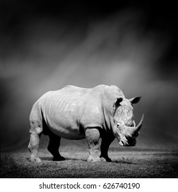 Dramatic black and white image of a rhino on black background