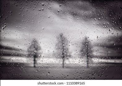 Dramatic black and white photograph of 3 trees in a park in black & white on a rainy day.