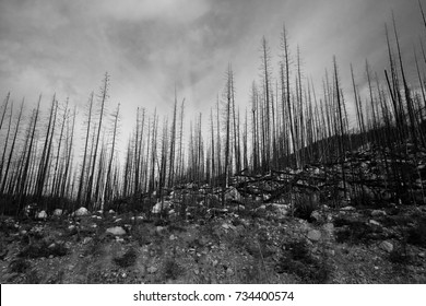 Dramatic black-and-white shot of forest-fire affected area in the Canadian Rockies.