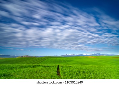 Dramatic blue sky and green wheat field with mountain Jakupitsa and peak Solunska Glava in distance. Agricultural concept. Touristic concept . Visit Macedonia.
