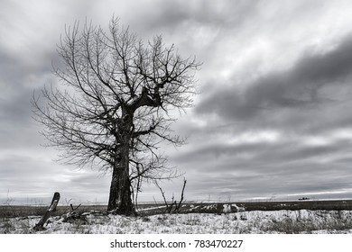 Dramatic B&W of barren tree near Davenport, Washington.