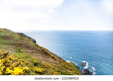 Dramatic cliffs and spectacular ocean views from New Quay in Cardigan Bay, Wales during Summer when the Sun is shining and Gorse is flowering.