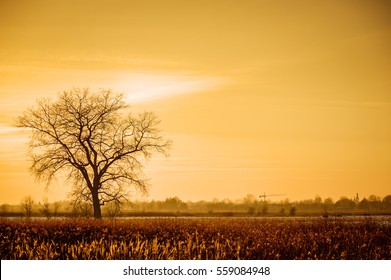 Dramatic colorful evening scene with Silhouette of leafless tree in sunlight.
