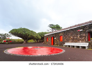 Dramatic and colorful picture of dragon tree (Dracaena) at vineyard on Pico island, Azores islands. Bright red circle on the ground makes unusual accent.