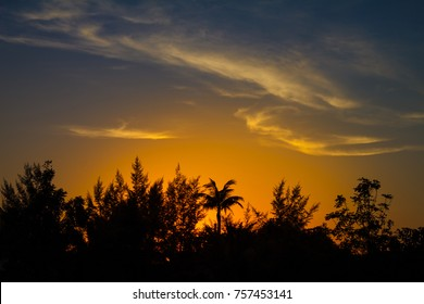 Dramatic colorful sunset with beautiful silhouette of palm tree on tropical Kamala beach in Phuket, Thailand.