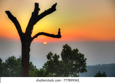 Dramatic colorful sunset through an artistic tree at Netarhat, Jharkhand, India