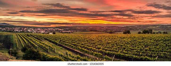 Dramatic evening with many vineyards in area around Velké Pavlovice called Modré hory, South Moravia, Czech Republic with view of Pálava.