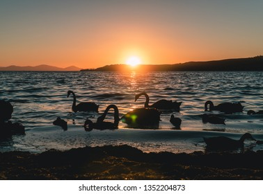 Dramatic evening silhouette shot of the ducks and swans. Lake Taupo at Sunset. Nature and sunset holiday concept. Orange, red and blue colors. Shot in North Island, New Zealand, NZ.