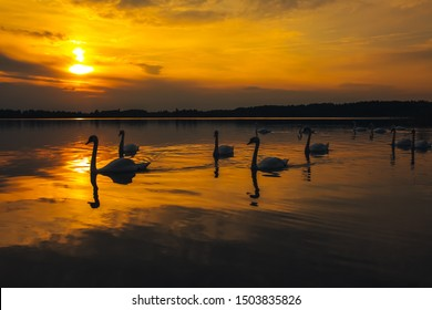 Dramatic evening silhouette shot of the ducks and swans. Nature and sunset holiday concept.