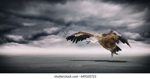Dramatic landscape with cloudy sky and dangerous vulture