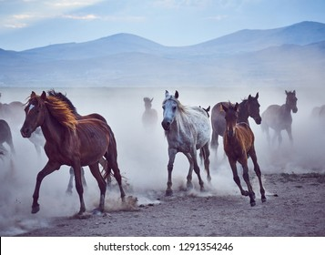 Dramatic landscape of wild horses running in dust. Horses (Yilki Atlari) live in Hurmetci Village, between Cappadocia and Kayseri, Central Anatolian region of Turkey.