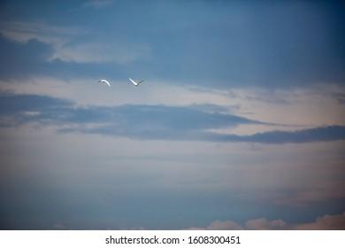Dramatic late autumn moody sky and two Great White Egrets in flight far away. Zlato Pole village, Municipality of Dimitrovgrad, Haskovo province, Bulgaria, Europe. Amazing scenery landscape - Shutterstock ID 1608300451