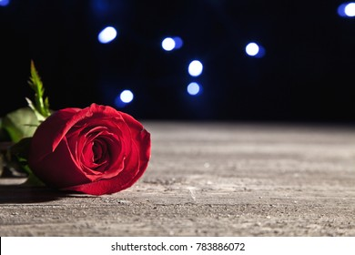 Dramatic lighting on rose in foreground with lights in the background.  Shallow depth of field with focus on rose petal.
