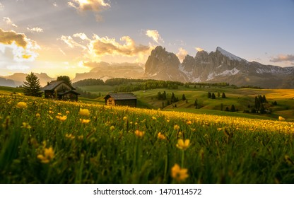 Dramatic misty fog with rolling flower and green grass hills during summer in Ski resort Seiser alm, South Tyrol, Italy.