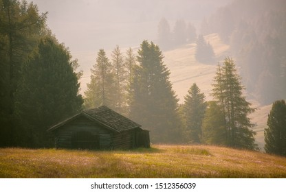 Dramatic misty fog with rolling pine forest and grass hills during summer in Ski resort Seiser alm, South Tyrol, Italy.
